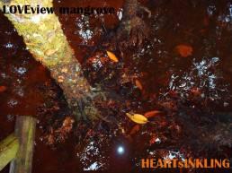 mangroveTRUNK